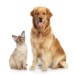 Cat and dog together (Demo)