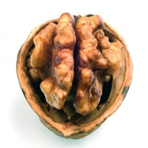 walnut_300x300