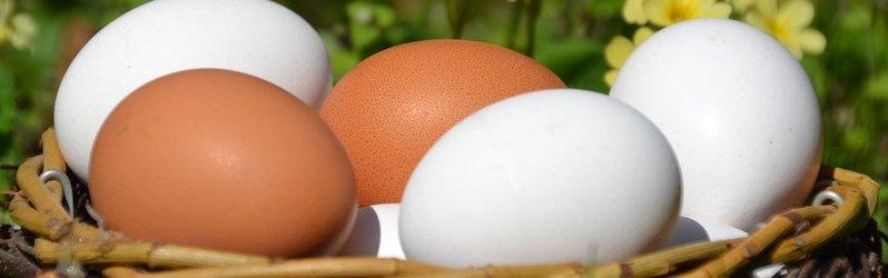 Ægallergi